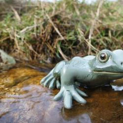grenouille (12 cm)
